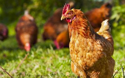 Top 5 Reasons to Buy Local and Seasonal Foods